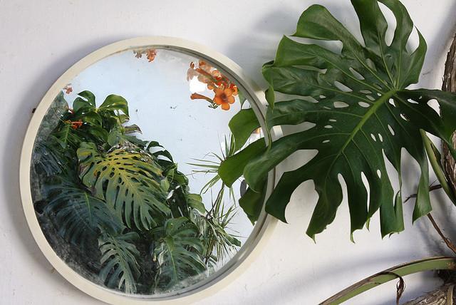 El espejo y la costilla